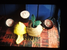 sock, coconut shells, grapefruit and plaster and wood (1) copy